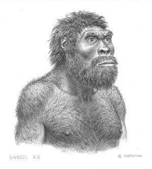 Ilustración del individuo del cráneo número 5 de Dmanisi.