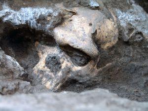 El cráneo número 5 de Dmanisi en el yacimiento.