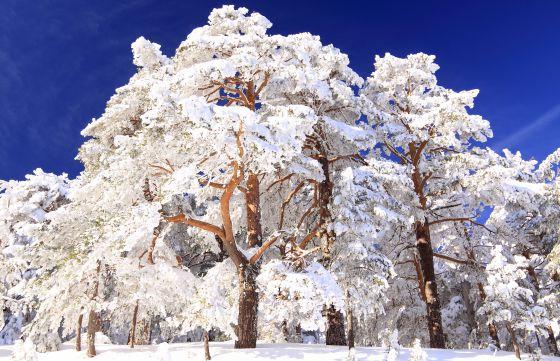 Imagen invernal en el recientemente creado Parque Nacional de Guadarrama.