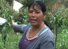 Una batalla por los bosques que se libra al pie de un volcán colombiano
