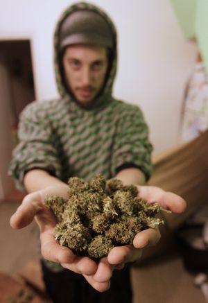 La marihuana busca un estatus legal