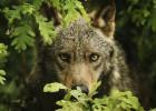 ¿Podemos cambiar el cuento del lobo?