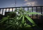 Argentina apoya despenalizar totalmente la marihuana