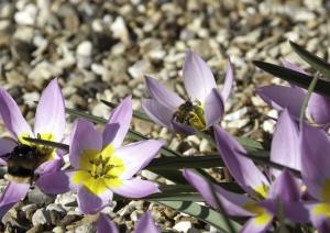Un abejorro en una flor.