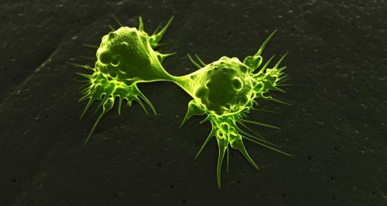 Células tumorales.