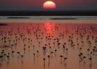 Doñana despeja las amenazas