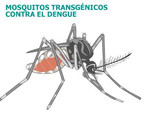 Brasil liberará mosquitos transgénicos contra el dengue