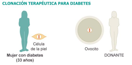 Obtenidas por clonación células productoras de insulina