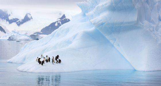 Unos pingüinos en la Antártida.