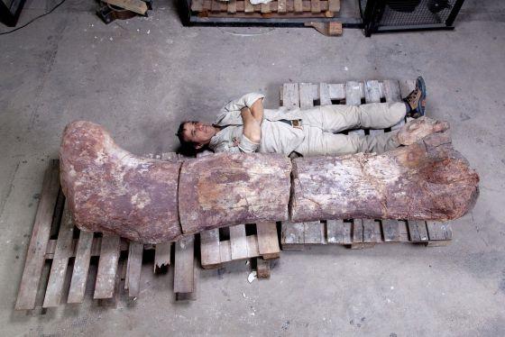 Descubierto el dinosaurio más grande hasta la fecha 1400352426_878852_1400352831_noticia_normal