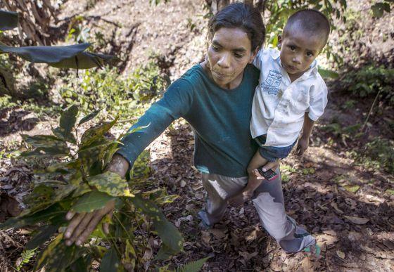 Una mujer y su hijo con una planta afectada por la roya.