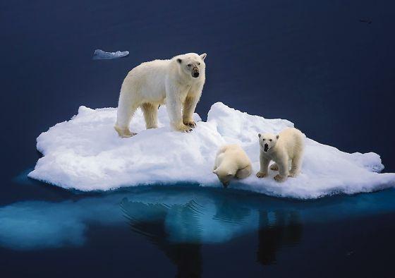 El Ártico: menos hielo y más intereses económicos