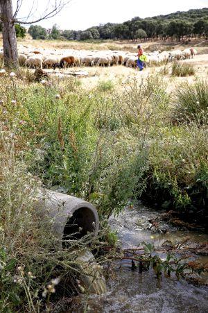 Vertido de aguas residuales en El Casar (Guadalajara).