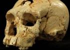 Los humanos de Atapuerca ya tenían rasgos neandertales