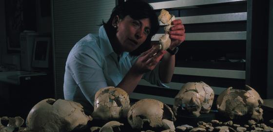 Ana Gracia reconstruye cráneos de la Sima de los Huesos en su laboratorio.