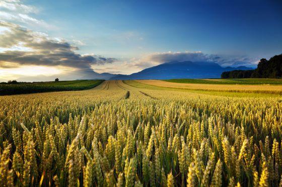 Campos de trigo en el interior de Estados Unidos.