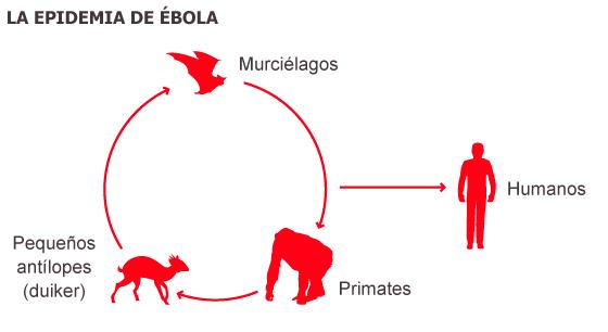 España se dispone a repatriar al sacerdote infectado de ébola