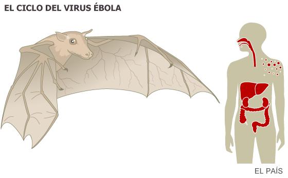 El religioso infectado de ébola será tratado con el fármaco experimental