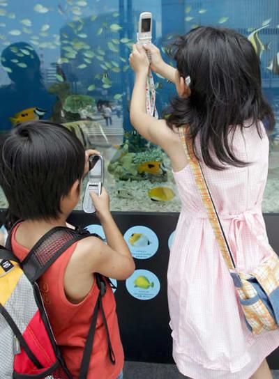 Niños fotografían peces con su móvil.