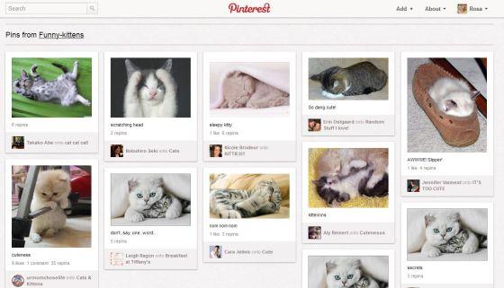 Los gatitos también invaden Pinterest