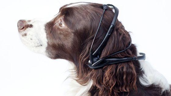 Los investigadores prueban un prototipo del No More Woof en un perro.