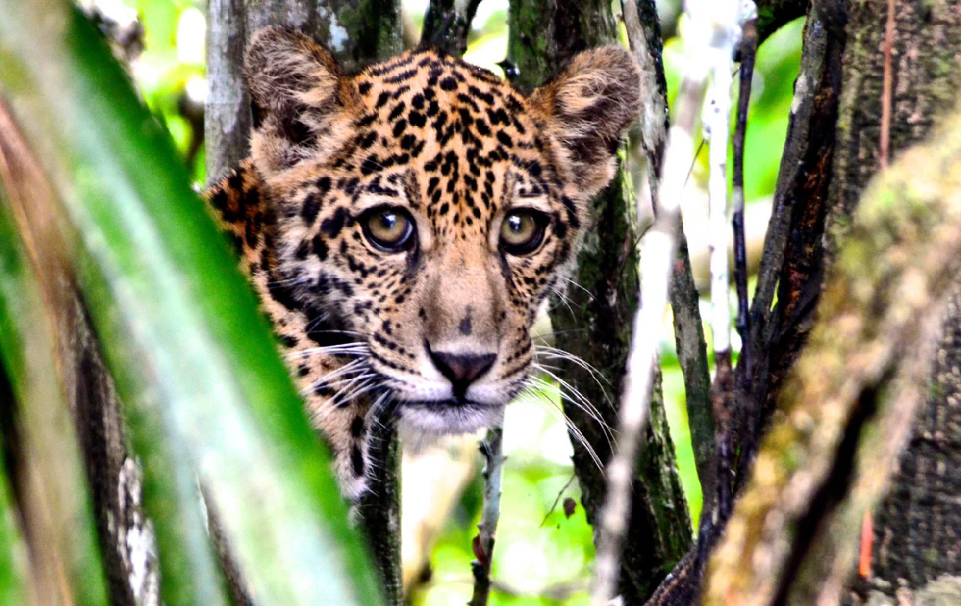 ¿Qué está pasando bajo la copa de los árboles del Amazonas?