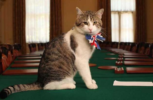 Retrato oficial de Larry. Gobierno del Reino Unido.