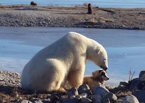 Ficou emocionado com o urso acariciando um cachorro? Pois a história acabou mal