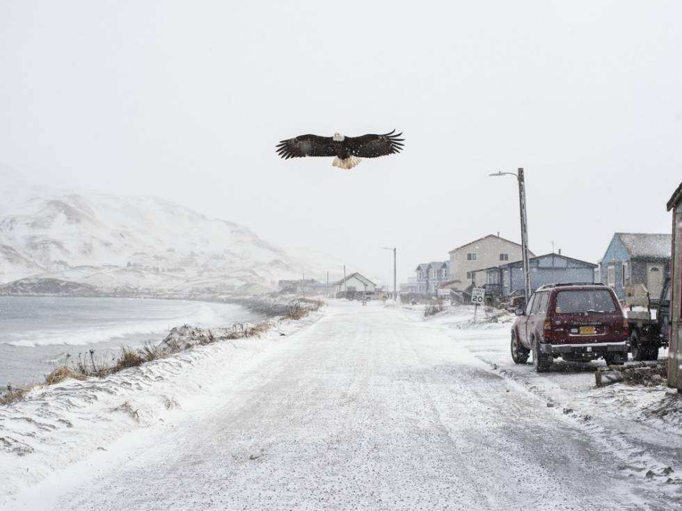 A rebelião das águias no Alasca