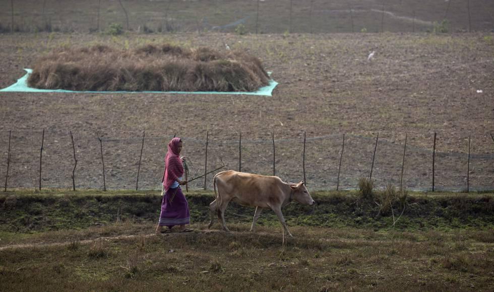 Mulher caminha com vaca em Gauhati, na Índia.