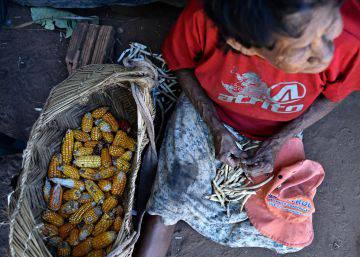 Sementes e resistência indígena para que os pássaros e a mata voltem
