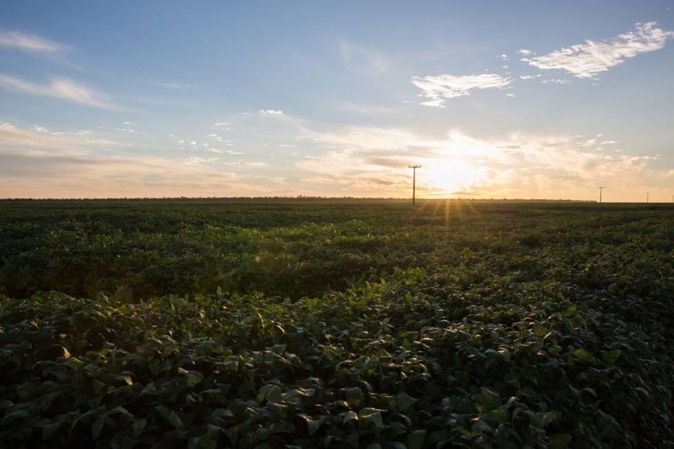Os campos de soja tomam os altos das chapadas nos quatro estados da região da Matopiba.