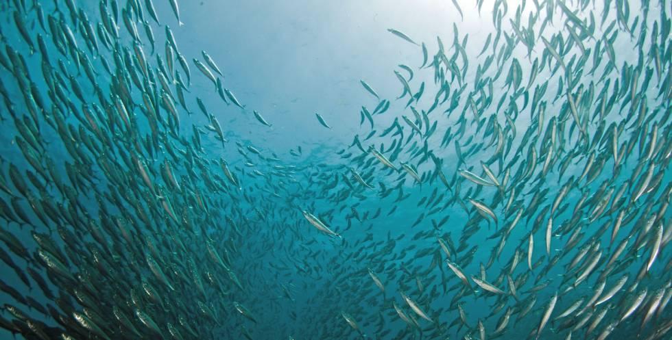 Migração de peixes devido à mudança climática