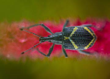 Meus adoráveis insetos