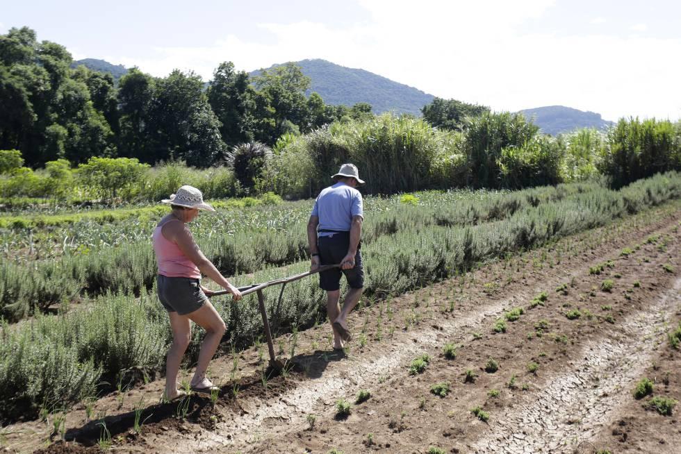 Os aposentados Iria e Jurandir dos Reis continuam trabalhando no campo para complementar a renda familiar.