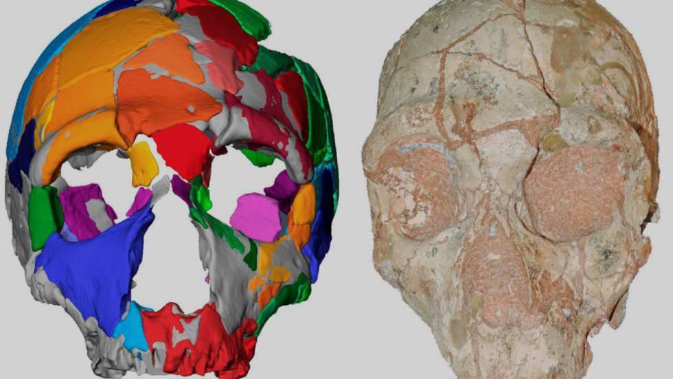 O crânio 2 da Gruta de Apidima (Grécia), atribuído a um neandertal e a reconstrução digital.
