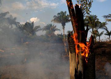 """Onda de incêndios na Amazônia sobe e Governo admite descontrole """"criminoso"""""""