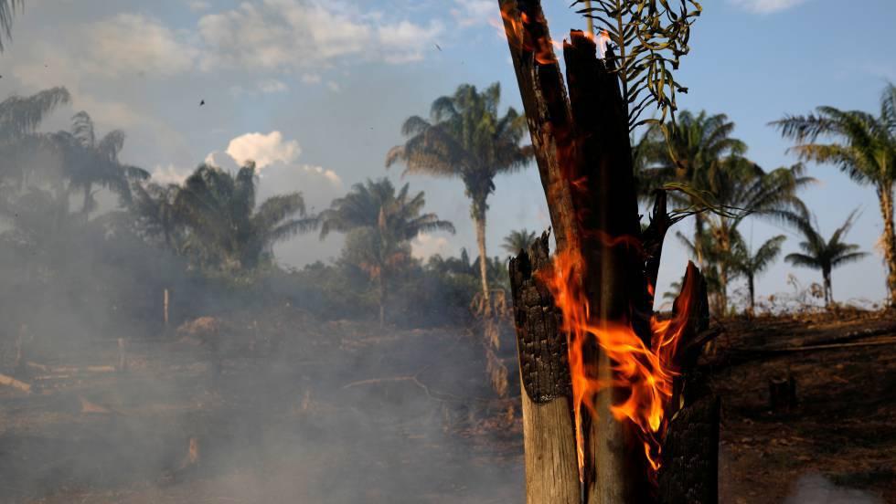 Incêndios na floresta amazônica causam alarme por aumento do desmatamento.