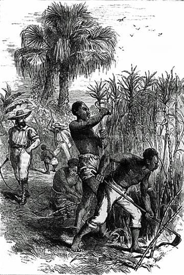 Cultiu amb esclaus d'una plantació de canya de sucre.