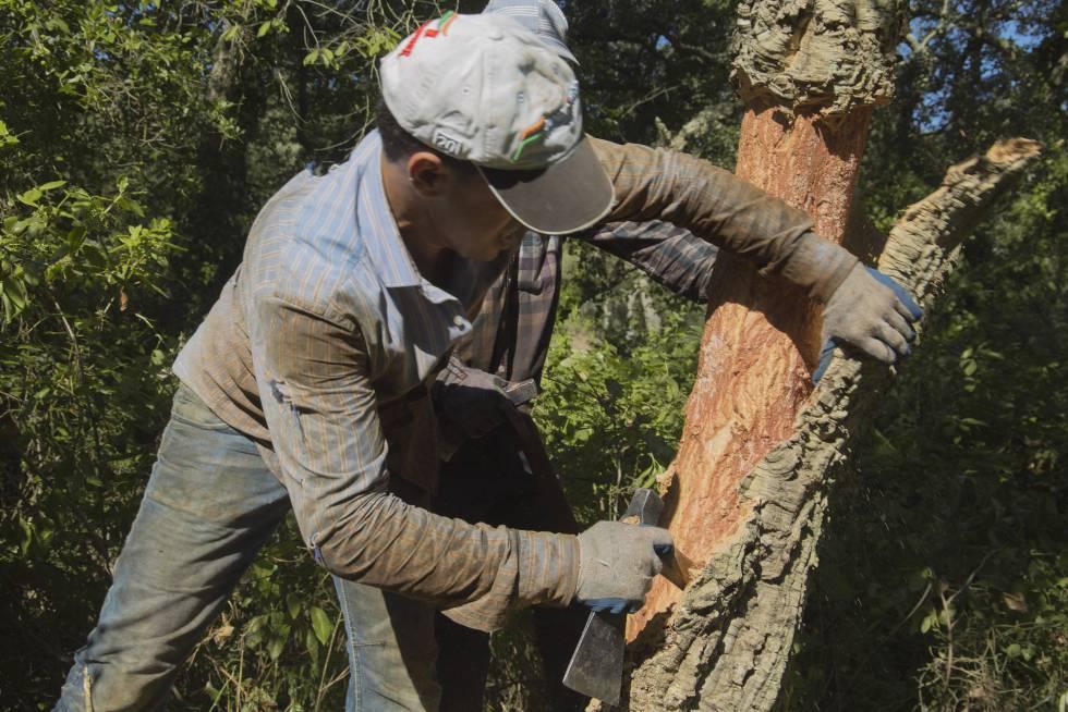 Trabajador del corcho en Girona.