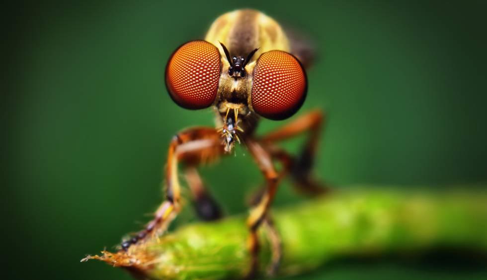 Imatge d'una mosca.