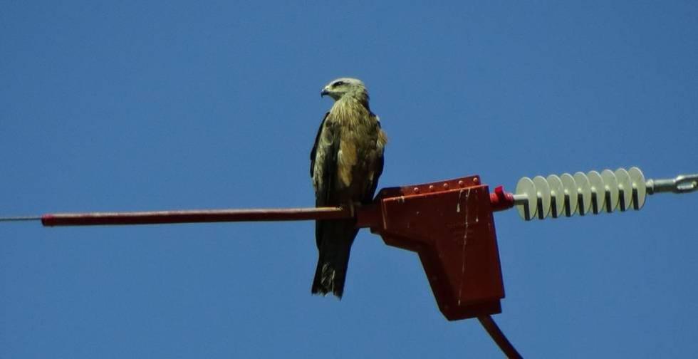 Endesa afronta una allau de sancions a Catalunya per la mort d'aus