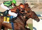Madrid miracle: horse honors dead trainer
