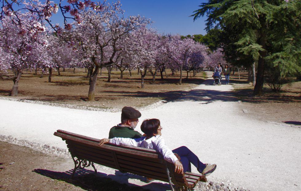 Una imagen de los almendros florecidos en La Quinta de los Molinos.
