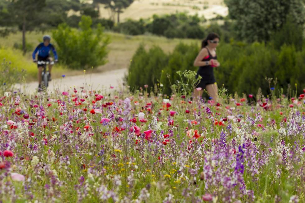 Pradera de flores en el parque Felipe VI en Madrid.