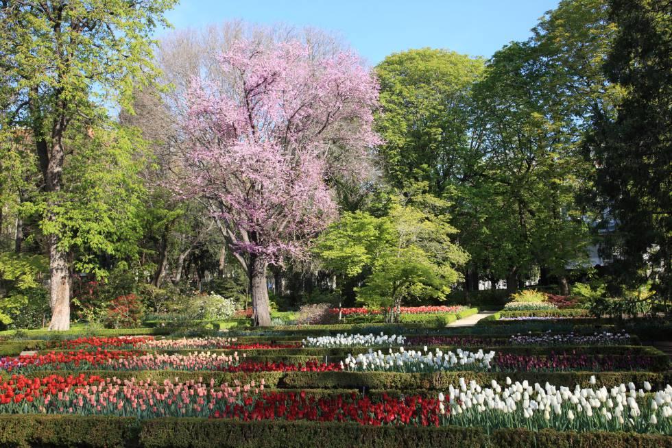 Tulipoman a junto al prado madrid el pa s for Jardin botanico en sevilla