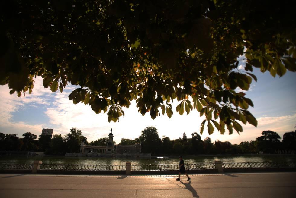 Anatomía forestal de Madrid: 1,5 millones de árboles en los parques ...