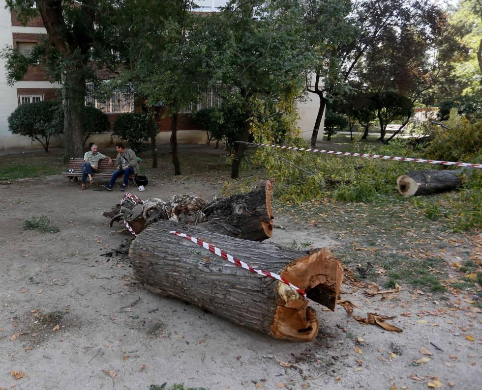 La colonia del manzanares se rebela por la tala de 500 for Tala de arboles madrid