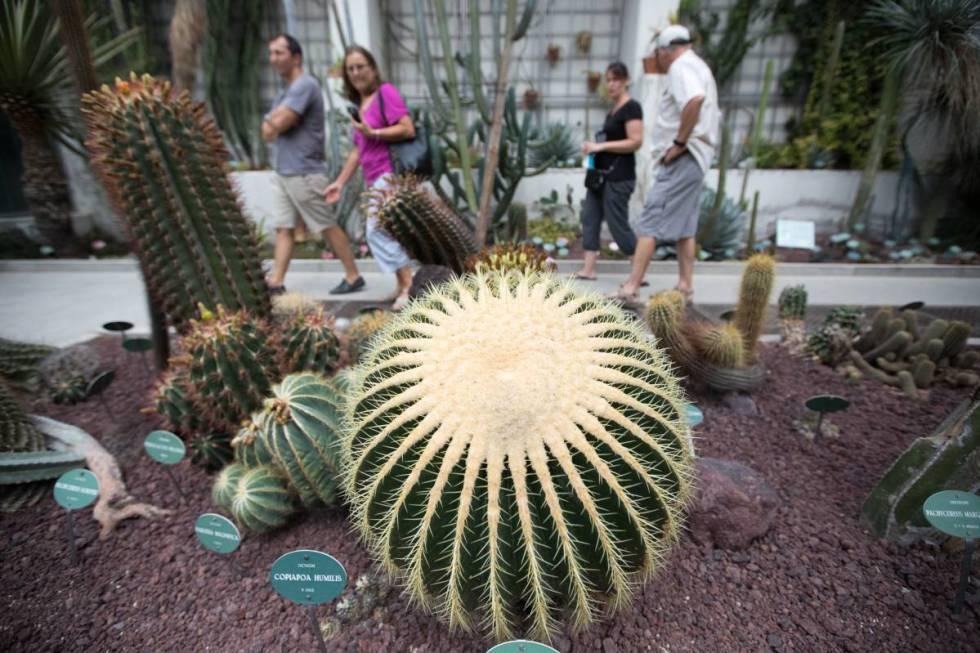 Fiesta capic a en el bot nico madrid el pa s - Jardin de cactus madrid ...