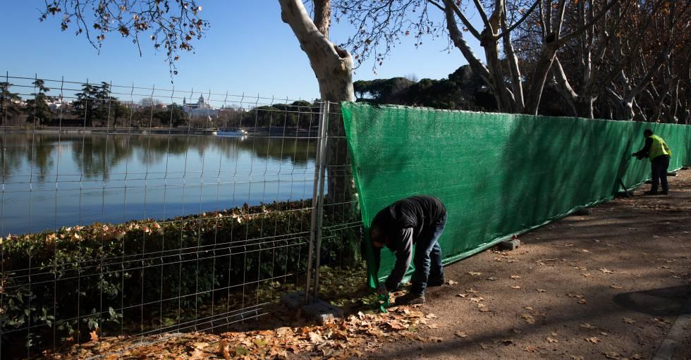 La limpieza del lago de la casa de campo obliga a for Peces para limpiar estanques